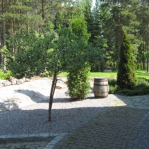 APPLE TREE BONZAI